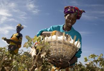 Fairtrade farmer  Mamouna Keita, in Batimaka village, in cotton growing region of Kita, Mali.