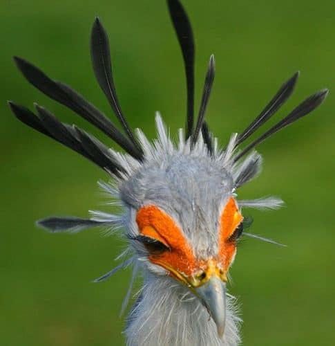 Sagittarius Bird